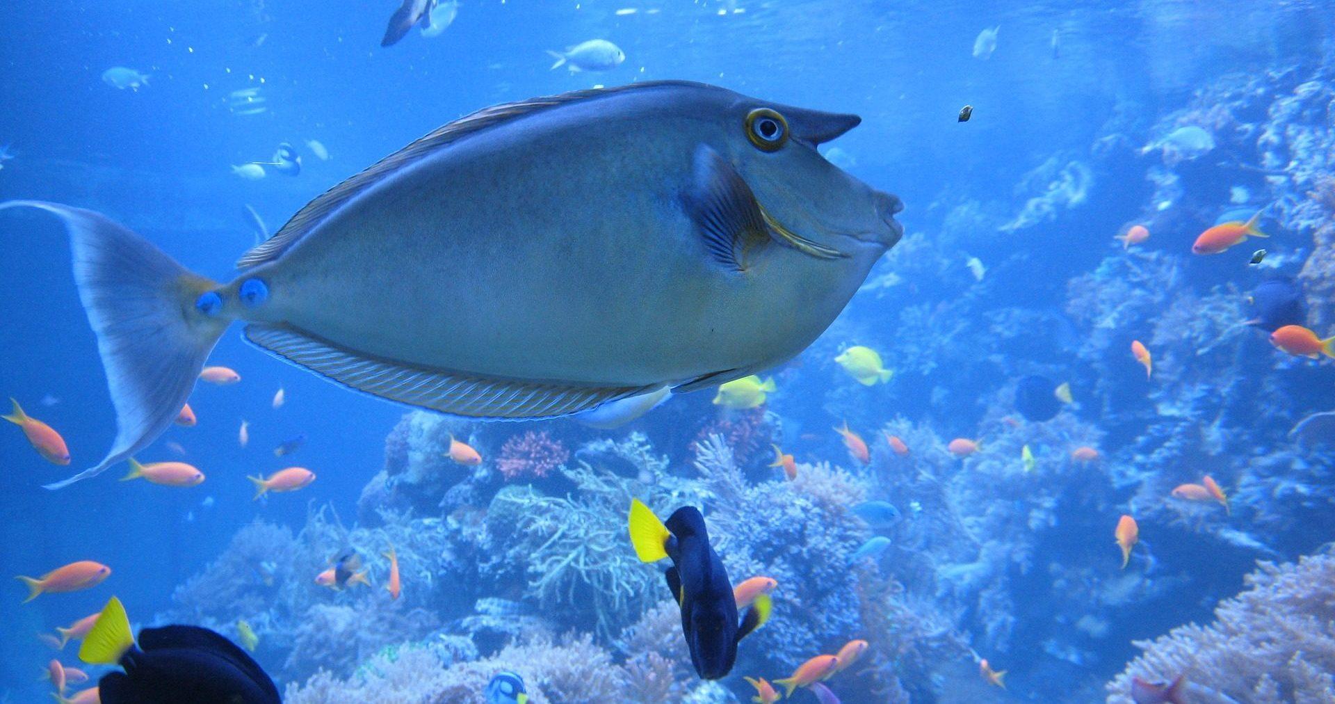 Unterwasserwelt in Sea Life
