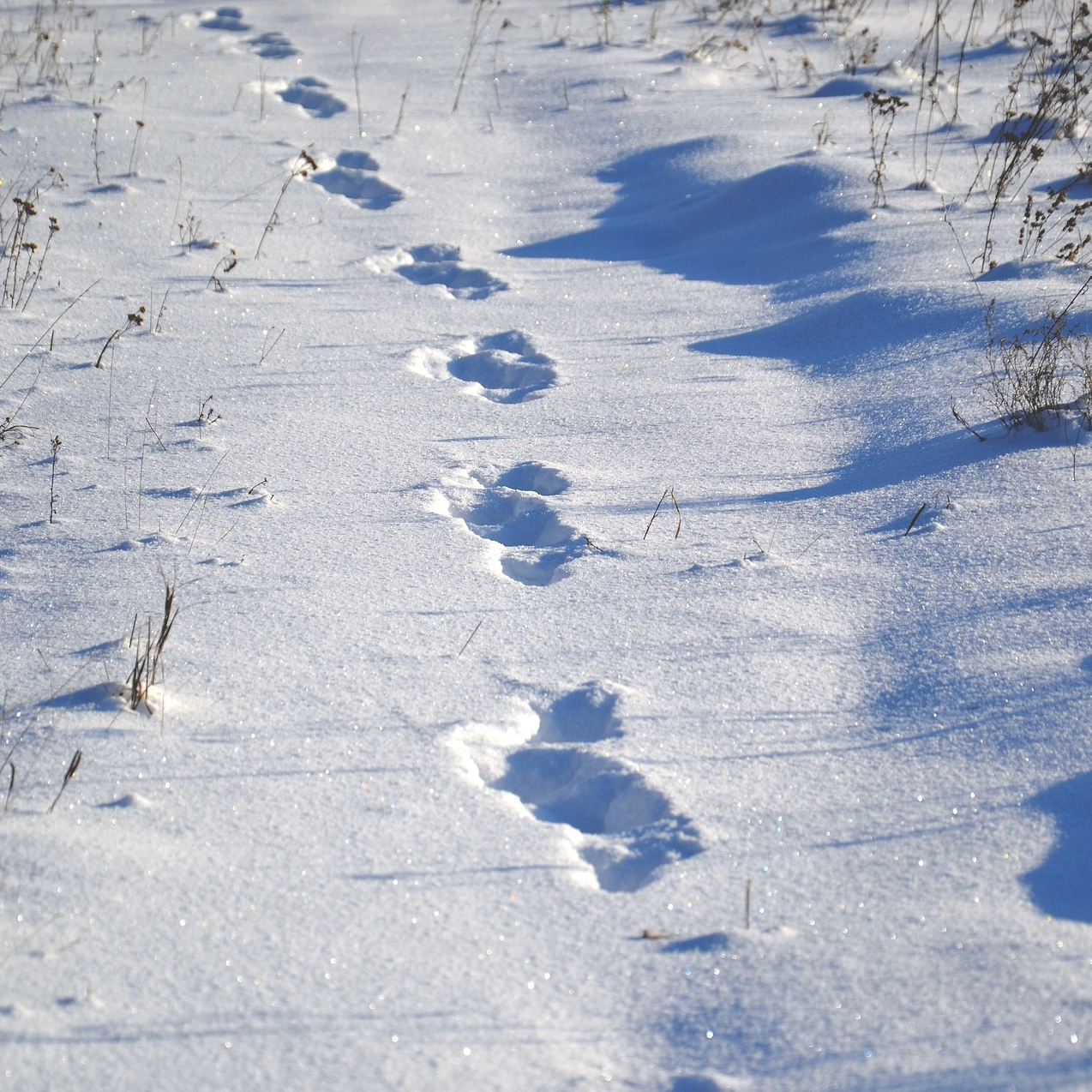 Tierspuren im Schnee