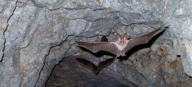 Fledermäuse im Kottenforst