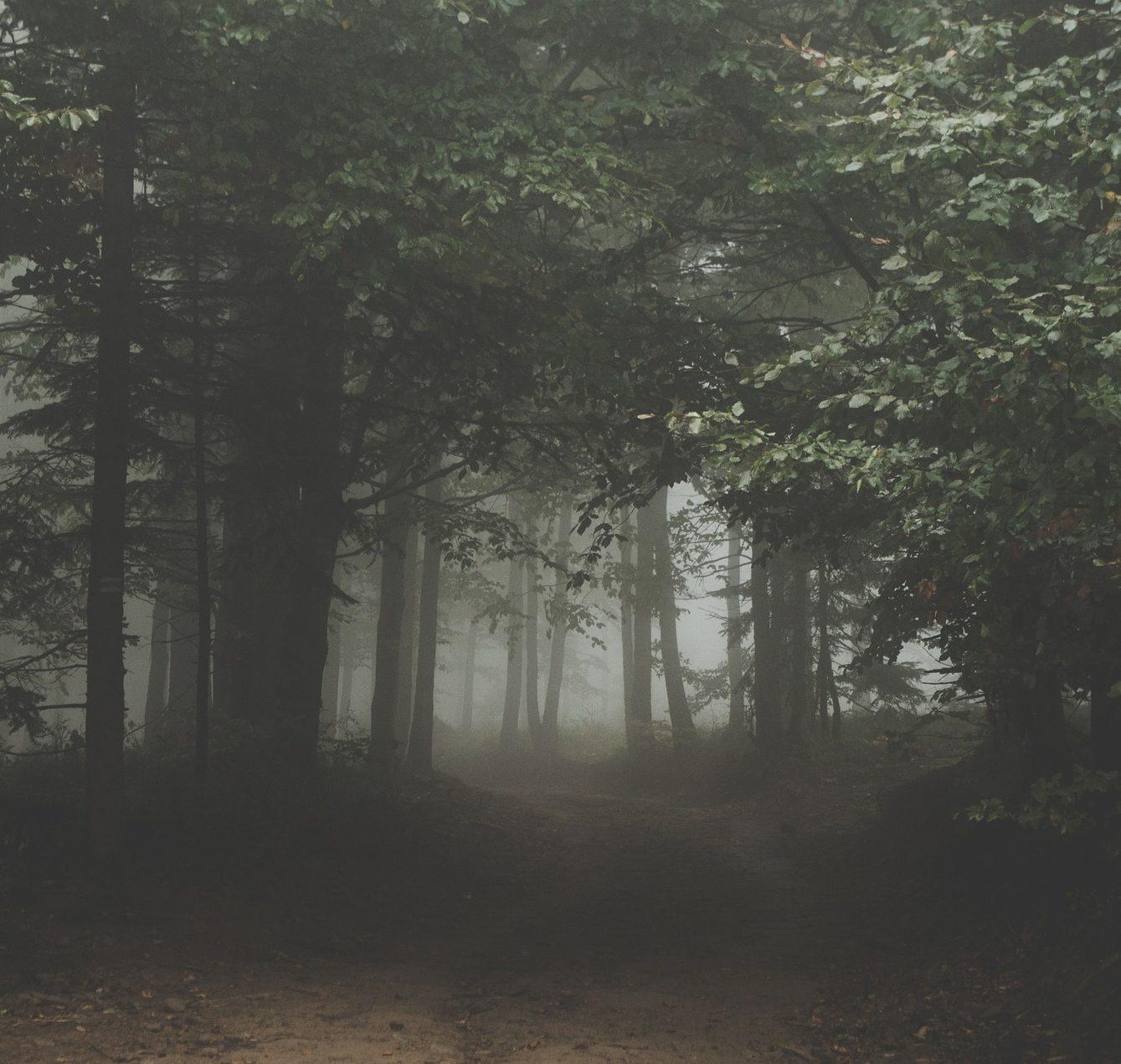 Wald in der Dämmerung